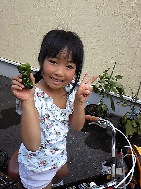 2012/07/19 23:02/ピーマン収穫☆
