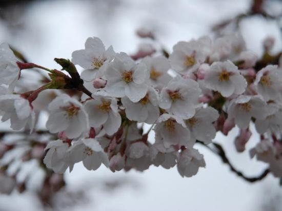 2014/04/21 14:56/ようやく飯豊町にも♪