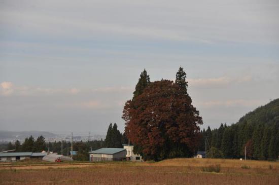 2011/10/30 17:44/トトロの森(2)