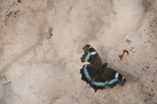 2014/03/20 18:36/冬の蝶