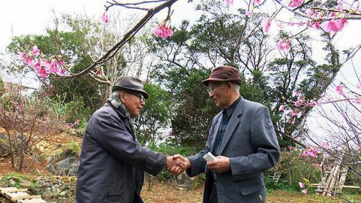 2020/01/16 12:26/沖縄から(7)…もうひとつの「桜を見る会」〜ソメイヨシノとカンヒザクラ