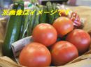 「【旬をお届け!夏野菜セット】」画像