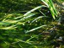 「【『梅花藻』が咲く季節になりま..」画像