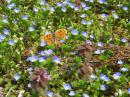 「小さな花が満開です」画像