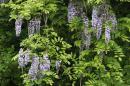 「新緑の中は花盛り」画像