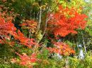 「紅葉見頃を迎え、燃える山々」画像