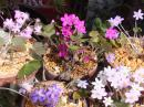 「庭先はお花畑」画像