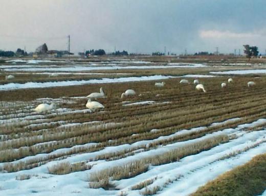 2012/03/15 09:00/花巻からシベリアへ帰り支度です