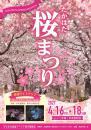 「「たかはた桜まつり」開催!」画像