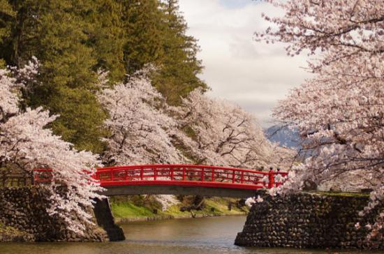 2015-4-21 松が岬公園の桜:2016/04/07 07:54