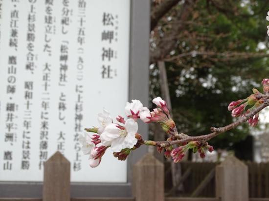 2018-4-7 桜開花:2018/04/10 09:55