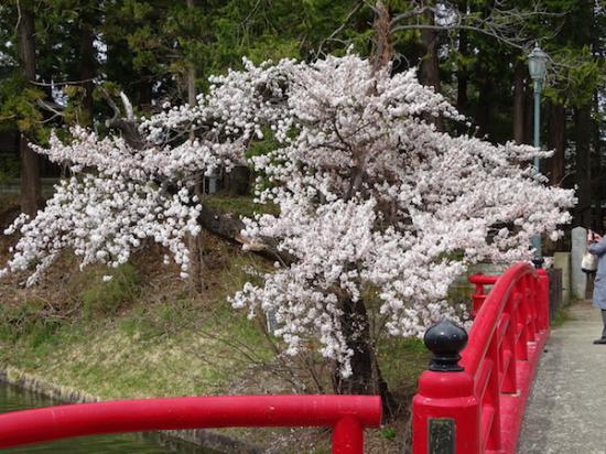 2018-4-14 桜:2018/04/15 09:30