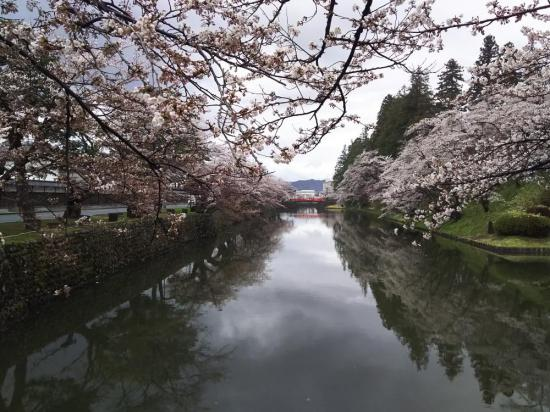 2018/04/15 12:07/2018年松が岬公園(上杉神社)桜情報4月15日 6分〜8分咲き(満開)