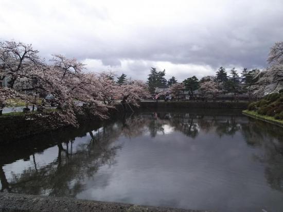 お堀沿いの桜:2018/04/15 12:27