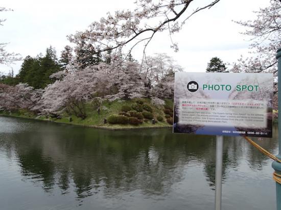 2018-4-14 三分から五分咲き(松が岬公園):2018/04/16 08:23
