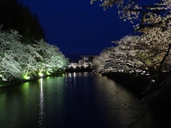 2018-4-17 夜桜:2018/04/17 20:28