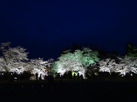 2018-4-17 夜桜:2018/04/17 20:31