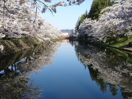 2018-4-19 桜は見頃です。:2018/04/19 09:19