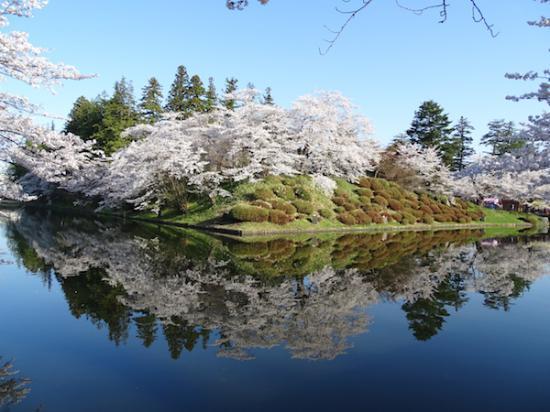 2018-4-19 桜は見頃です。:2018/04/19 09:21