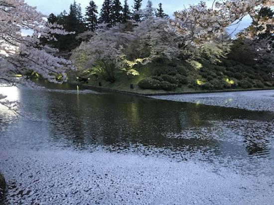 2019-4-25 上杉神社の花筏:2019/04/26 08:58