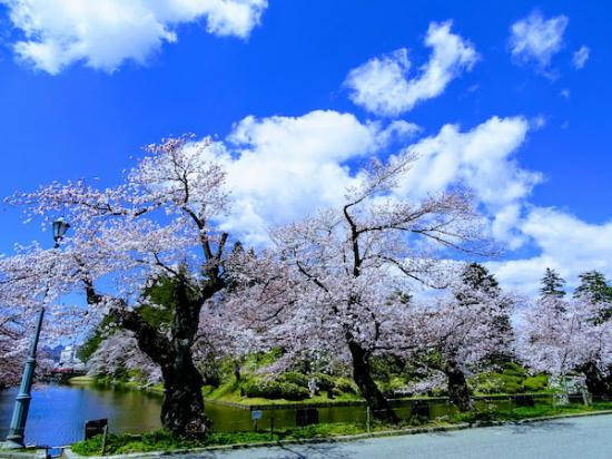 2020-4-16 松が岬公園の桜:2020/04/16 17:36