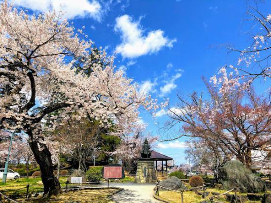 2020-4-16 上杉神社の桜:2020/04/17 08:11