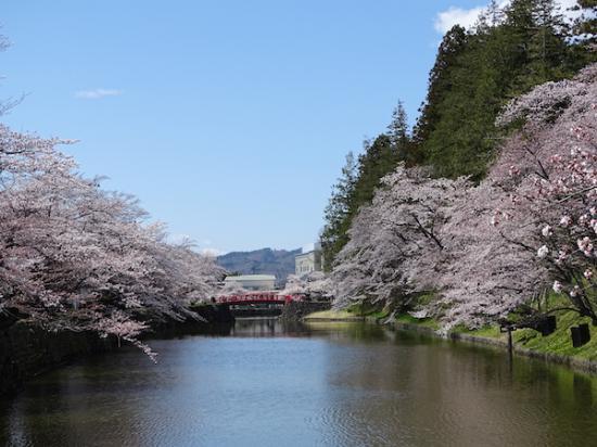 2020-4-16 松が岬公園の桜:2020/04/17 08:40