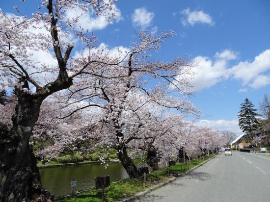 2020-4-16 松が岬公園の桜:2020/04/17 08:41