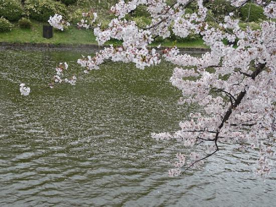 2020-4-23 松が岬公園の桜:2020/04/23 19:30
