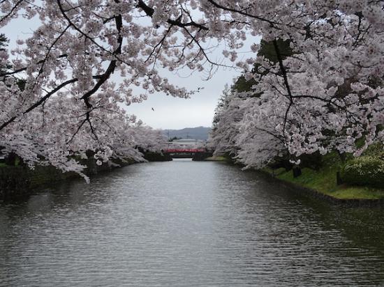 2020-4-23 松が岬公園の桜:2020/04/23 19:34