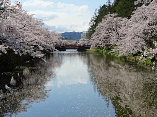 2020-4-24 上杉神社の桜:2020/04/25 08:15
