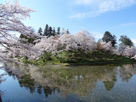 2020-4-24 上杉神社の桜:2020/04/25 08:16