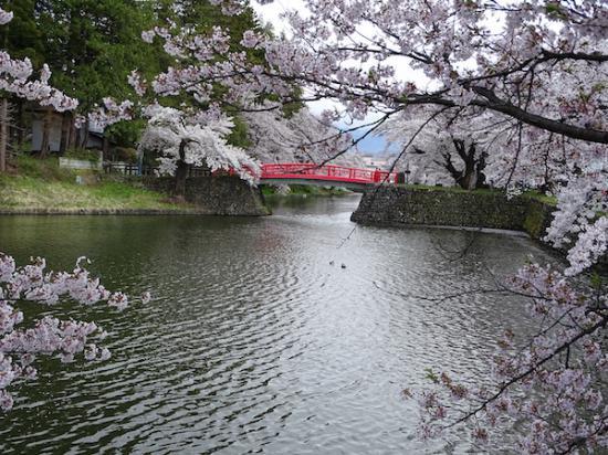 2020-4-24 上杉神社の桜:2020/04/25 08:18