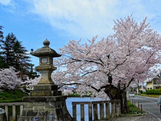 2020-4-24 上杉神社の桜:2020/04/25 08:21