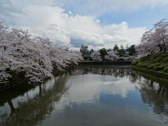 2020-4-24 上杉神社の桜:2020/04/25 08:23