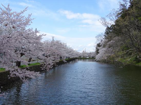 2020-4-24 上杉神社の桜:2020/04/25 08:27