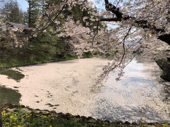 2020-4-28 上杉神社の桜:2020/04/28 11:58