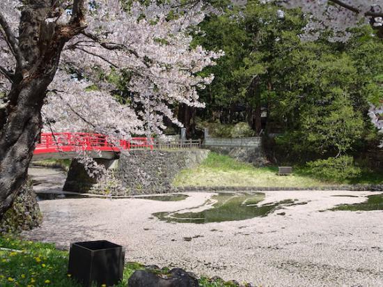 2020-4-28 上杉神社の桜:2020/04/28 12:04