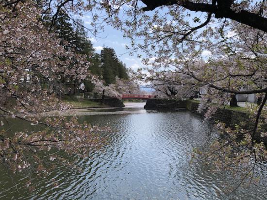 2020-4-28 上杉神社の桜:2020/04/28 12:13
