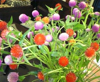 2011/09/20 13:09/●美味しそうな花(_