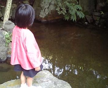 2011/10/05 22:10/●「藤三旅館」さんの池にサメがいます