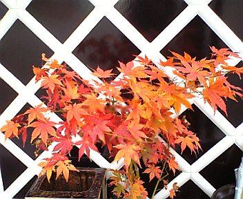2011/10/24 11:32/●秋ですね〜(^_^)