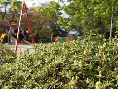 2014/05/05 13:00/【いまの松ケ池(白つつじ)公園】