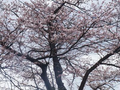 2017/04/22 06:30/【季節の展示会 ご案内】